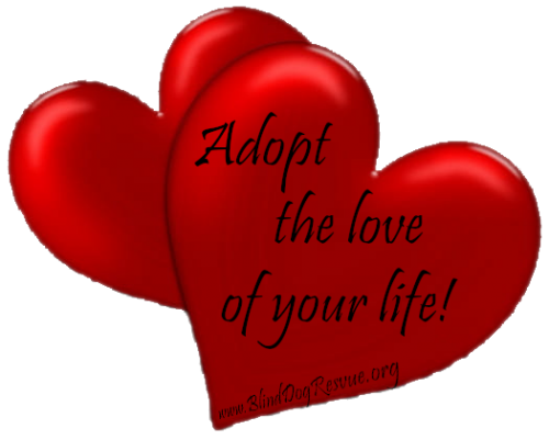 Adopt the love of your life